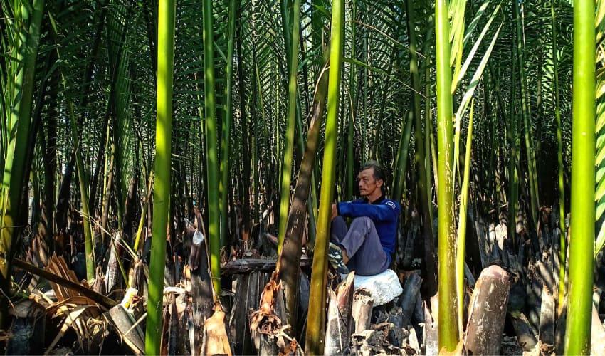 Bay Mau Coconut forest