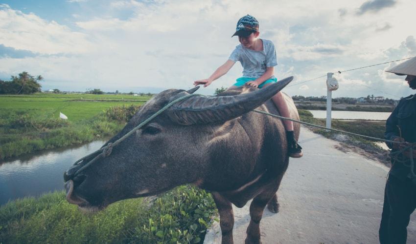 Buffalo riding